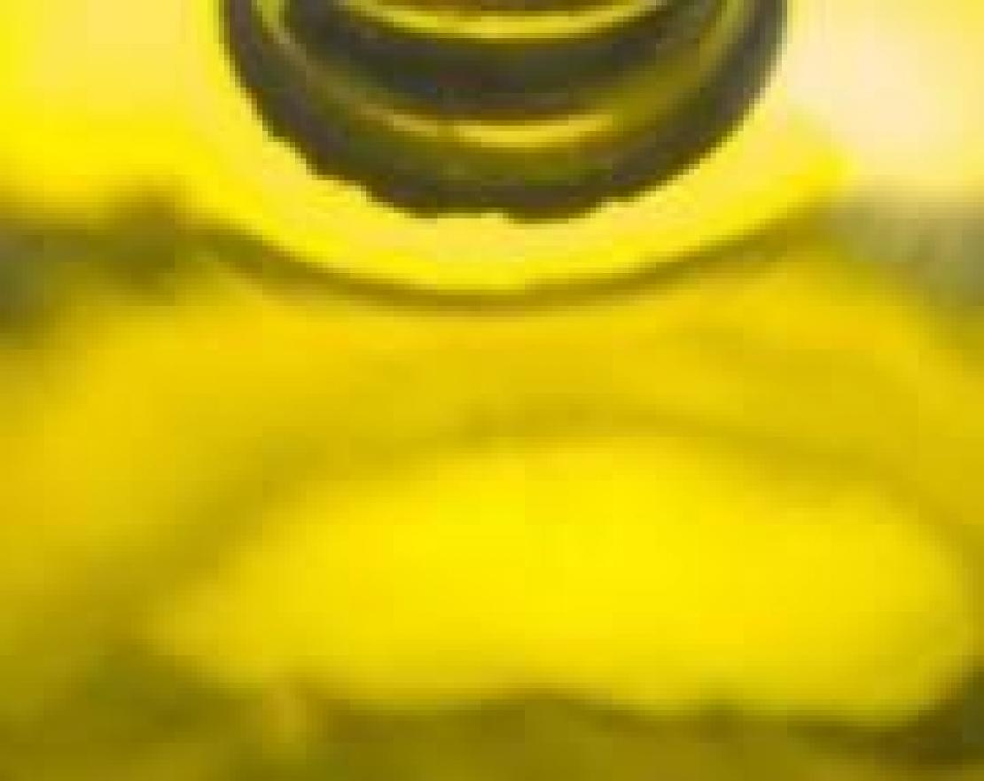 Allarme Italia, si vuole affossare il comparto olio di oliva