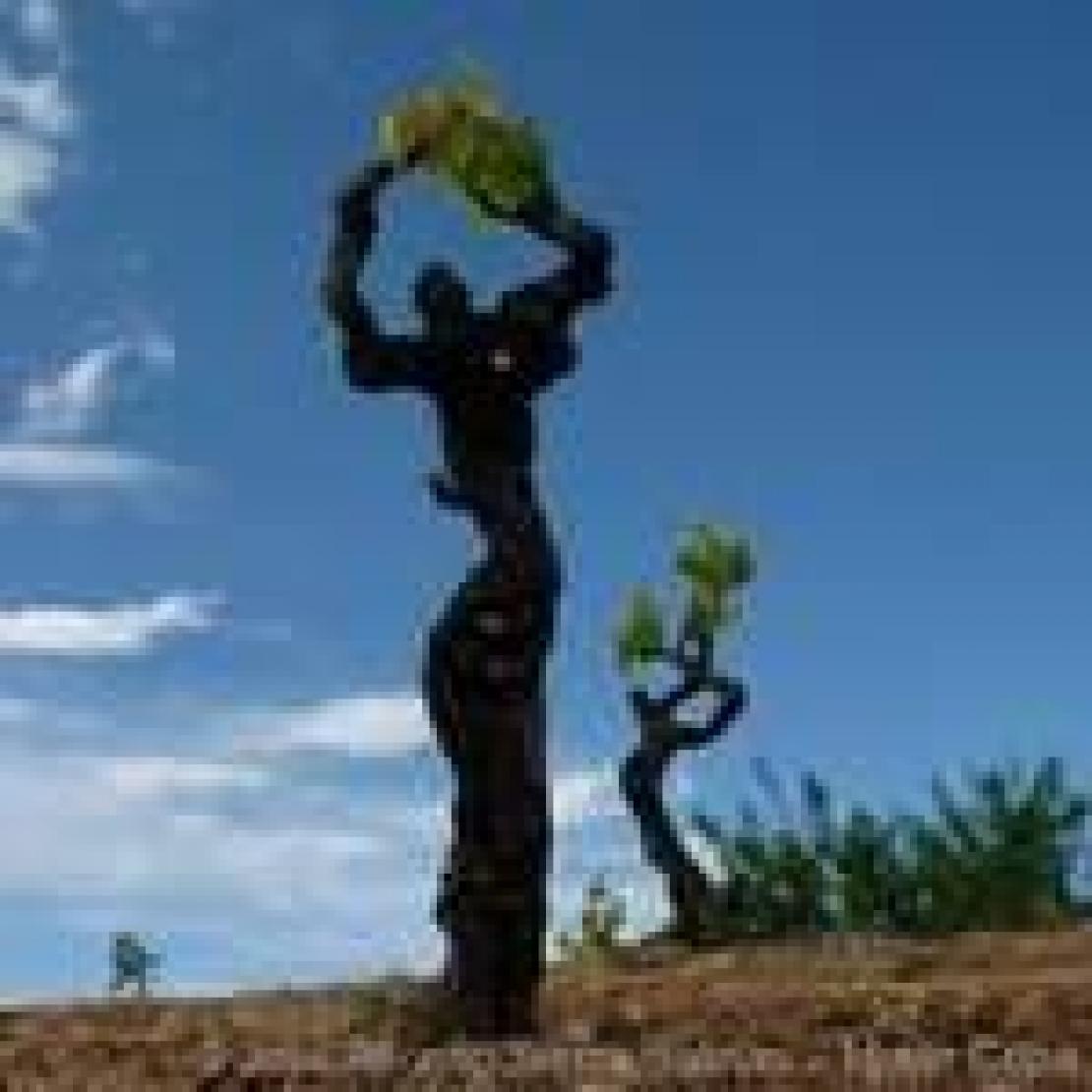 Un percorso legislativo che è diventato cultura vitivinicola