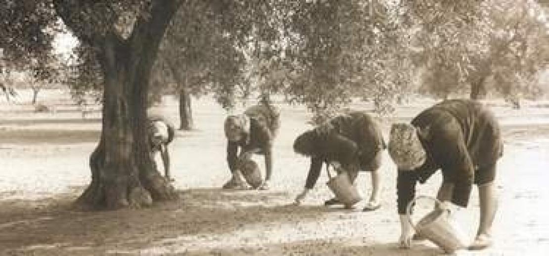 Donne dell'Olio, non solo in Italia, ma a fianco dell'olivicoltura italiana