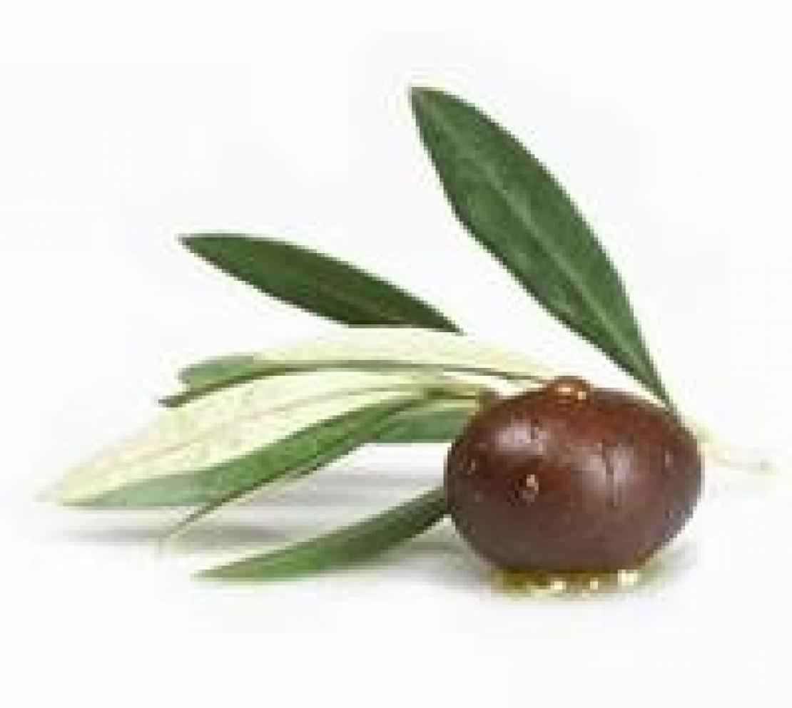 L'indice di maturazione delle olive, come interpretarlo correttamente?