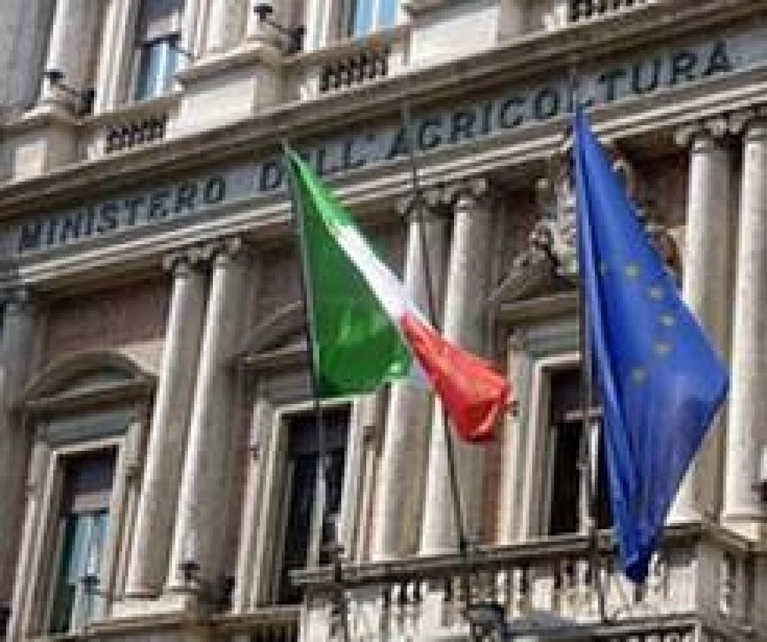Il pasticcio del Ministero delle politiche agricole sul falso olio d'oliva Made in Italy. Retromarcia? Forse no