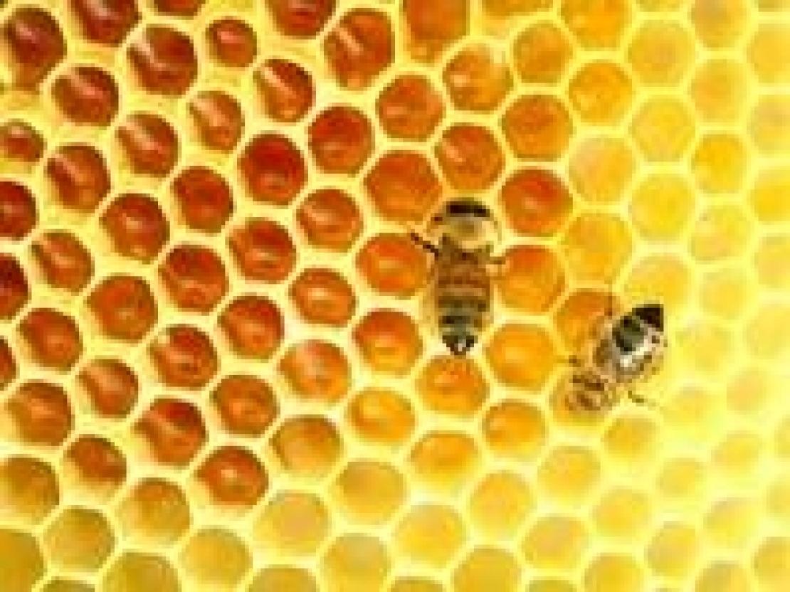 Cultura di prodotto, a che serve? L'esempio del miele