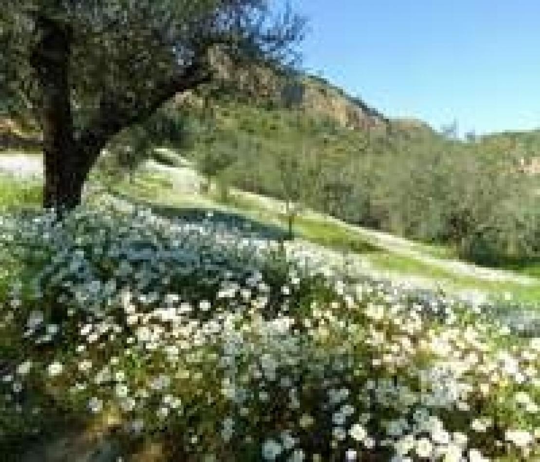 Perchè devono essere gli stranieri a dover tutelare il nostro paesaggio e la nostra tradizione olivicola?