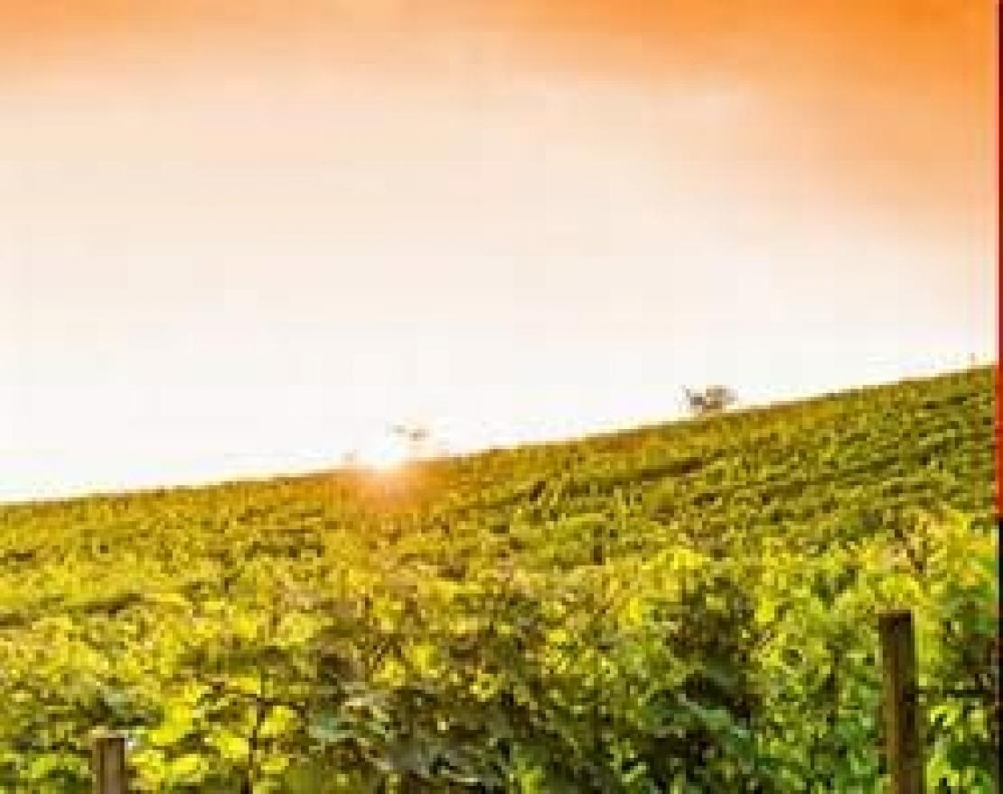 Il riscaldamento globale sta cambiando lo scenario internazionale del terroir vitivinicolo