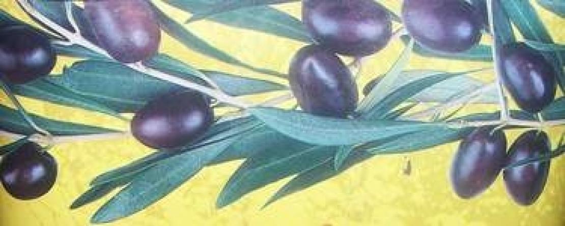 La grande storia dell'ulivo, un tuffo nell'infanzia