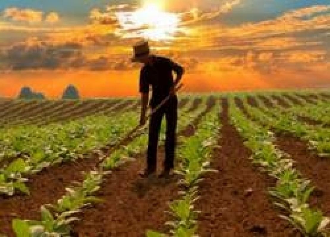 Agricoltori tutti pagati entro fine giugno ma scatta la proroga a metà ottobre