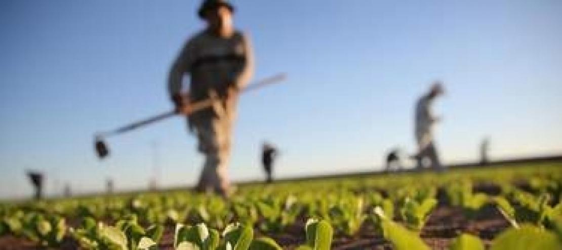 Una legge per tutelare l'agricoltura contadina