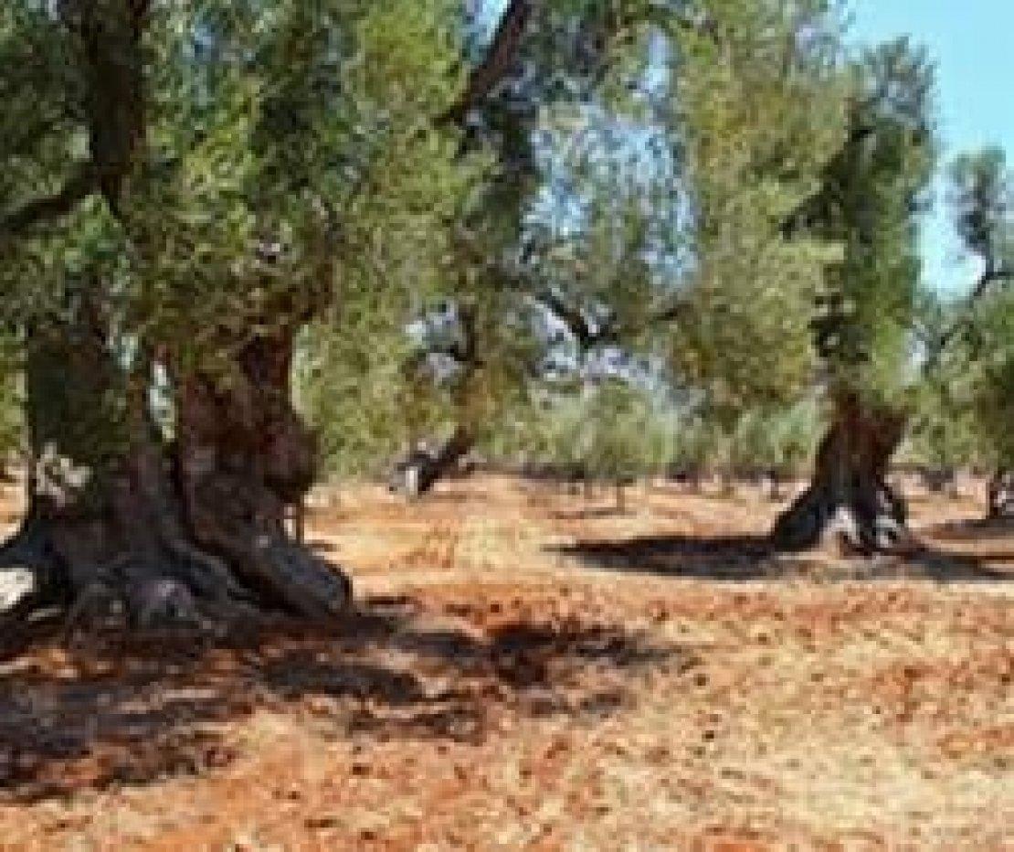 Appunti di viaggio nella Terra degli Olivi: la Puglia da ricordare e quella da dimenticare