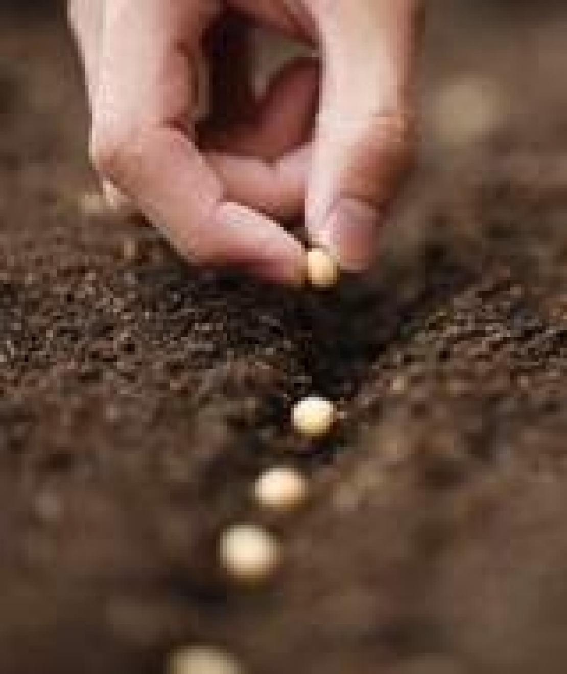 Tre multinazionali domineranno su sementi e fitofarmaci