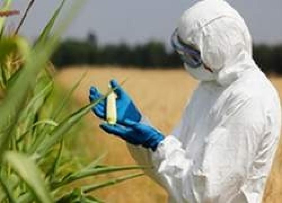 Più potere alle Regioni per limitare o vietare la coltivazione di OGM