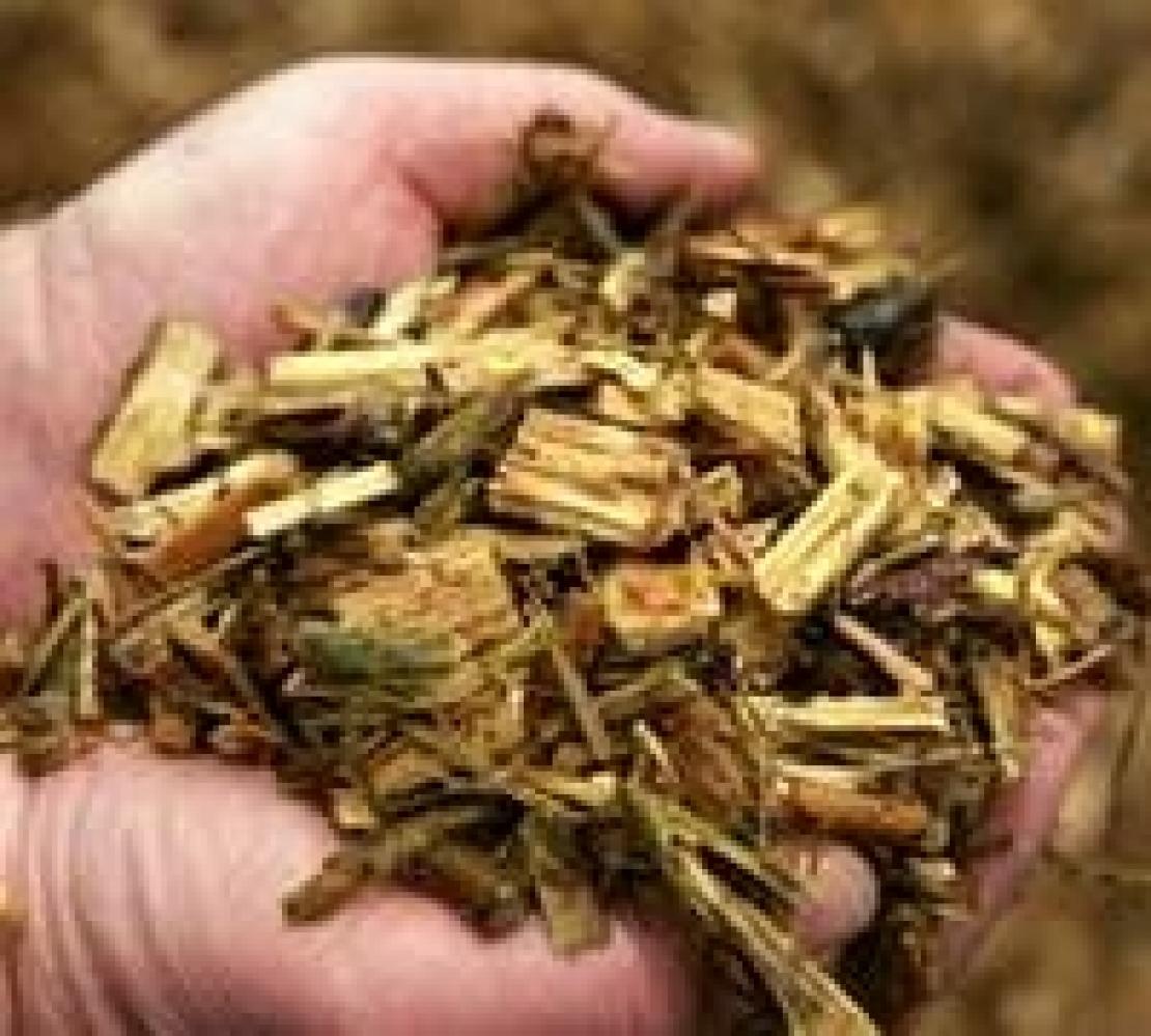 Per un'economia sempre più green, biomasse legnose nelle bioraffinerie