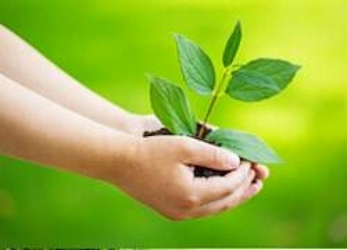 Nuovo stallo sul regolamento per il biologico. Tutto rimandato all'anno che verrà