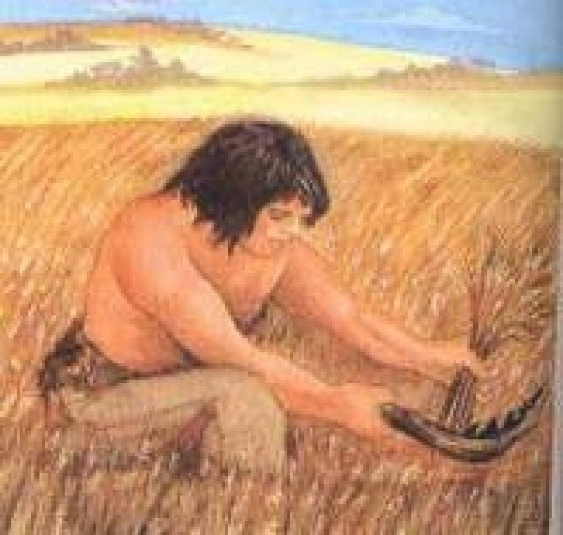 Quando è nata l'agricoltura? 23 mila anni fa
