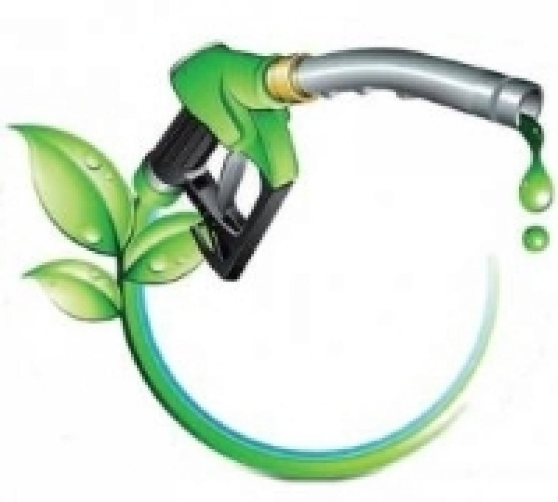 Colture bioenergetiche di secondo raccolto per alimentare la filiera del biometano