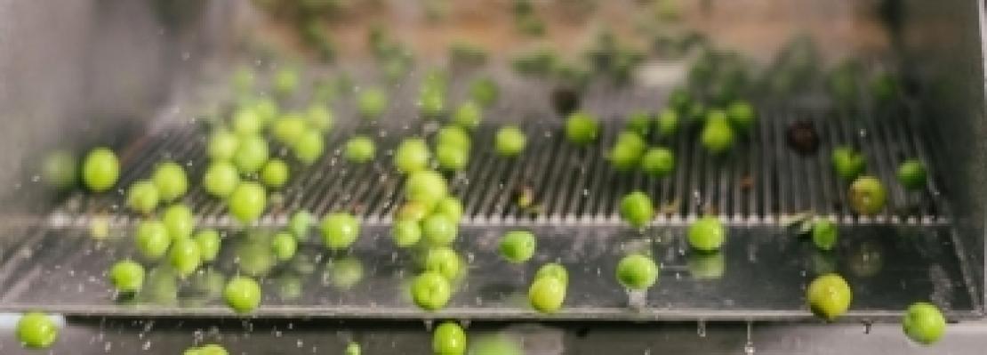 Tecnologia olearia e normativa sull'olio extra vergine di oliva di qualità, a Spoleto le ultime novità