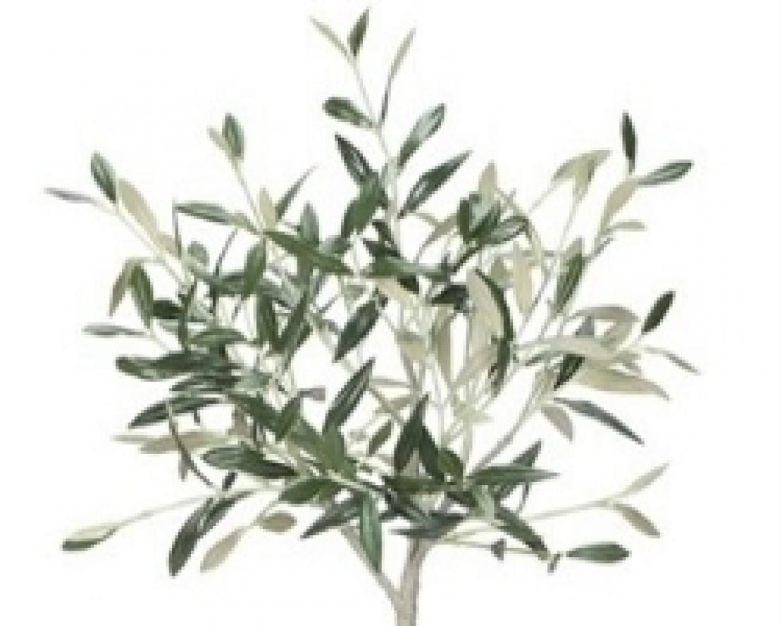 Il segreto linguaggio dell'olivo e la cultura dell'anima
