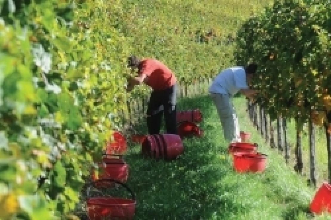 Nuovi voucher in agricoltura, l'Inps ridefinisce le retribuzioni orarie