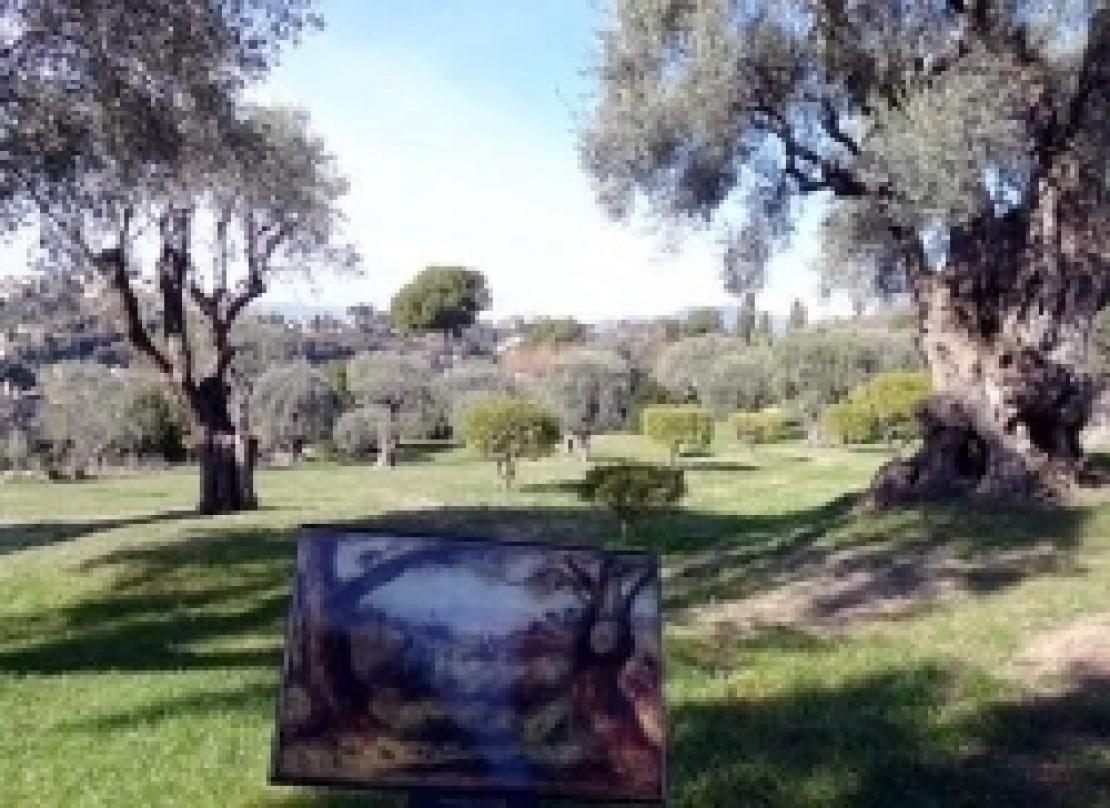 Riscoprire un compagno di viaggio: l'olivo. Per amarlo, onorarlo e rispettarlo