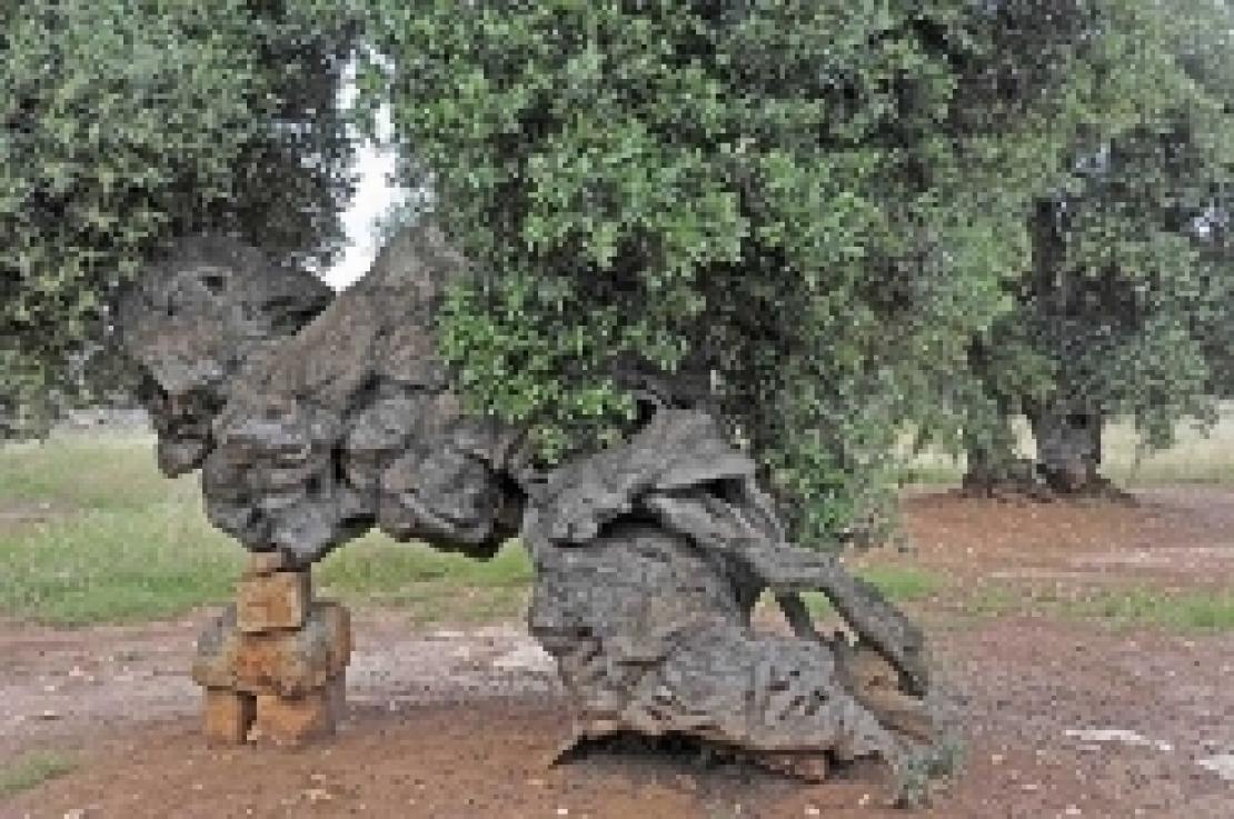 Ai piedi di un olivo sulla via francigena, il viaggio come terapia per l'anima