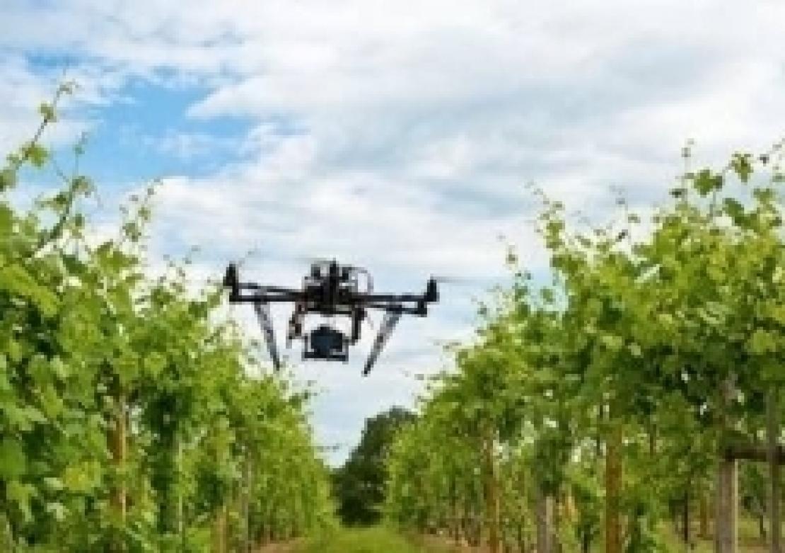 Dalla zonazione alla viticoltura di precisione, tecnologia e droni al servizio della qualità