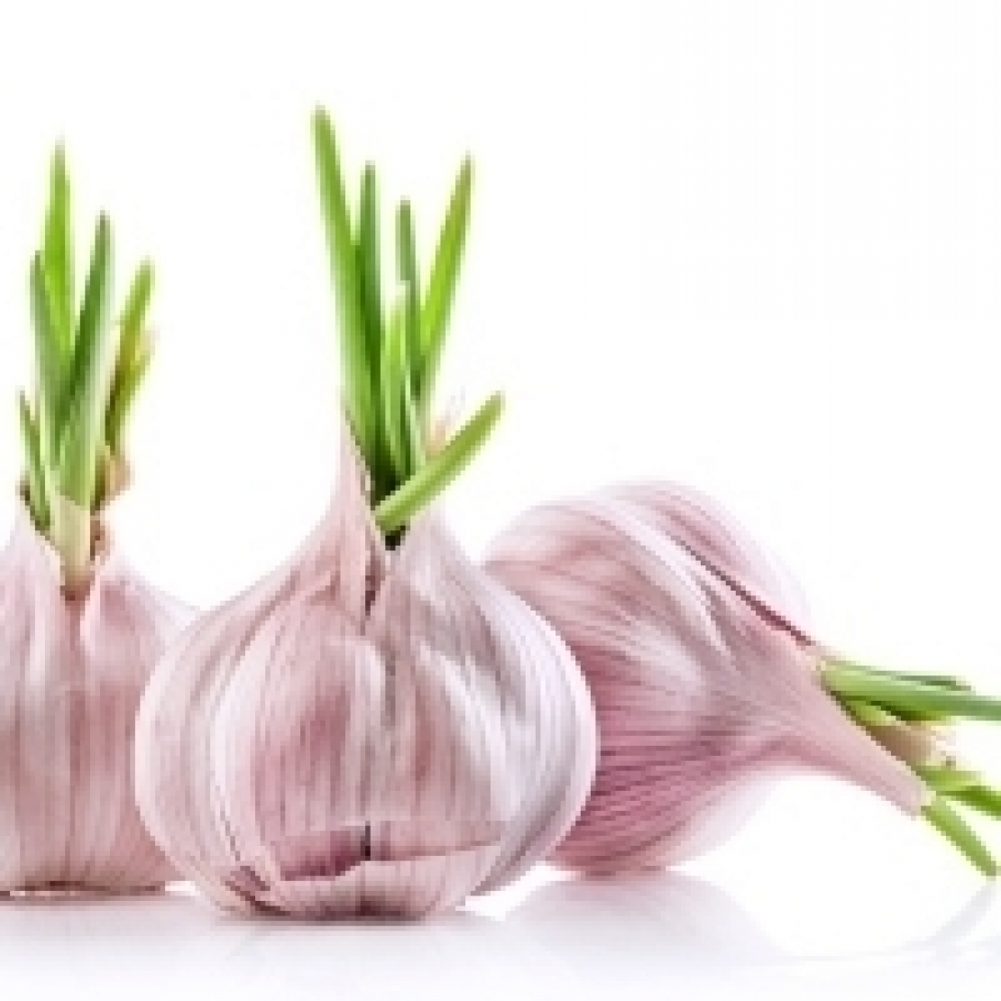 L'aglio, alimento utile per combattere le infezioni