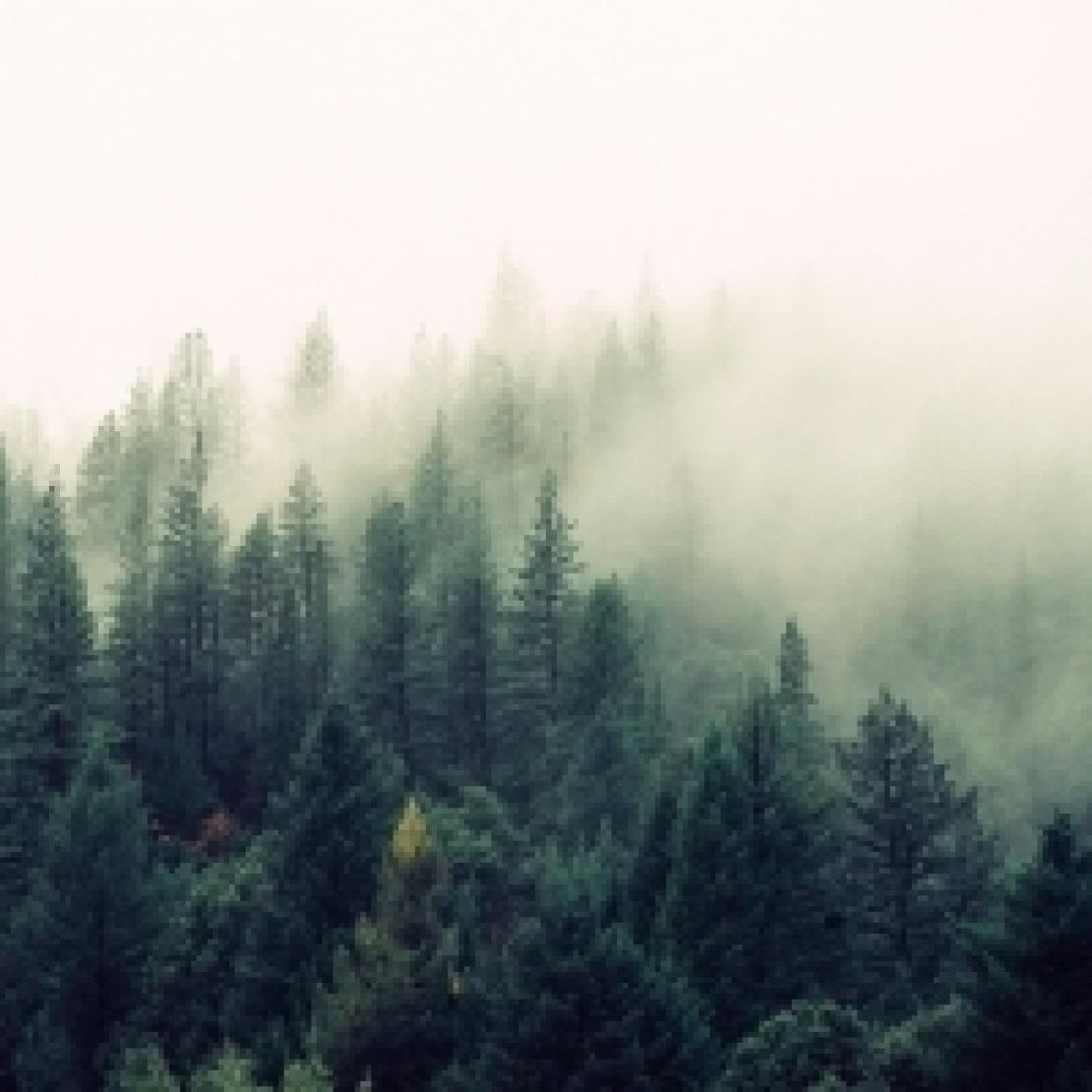 Una nuova politica nazionale per i boschi italiani