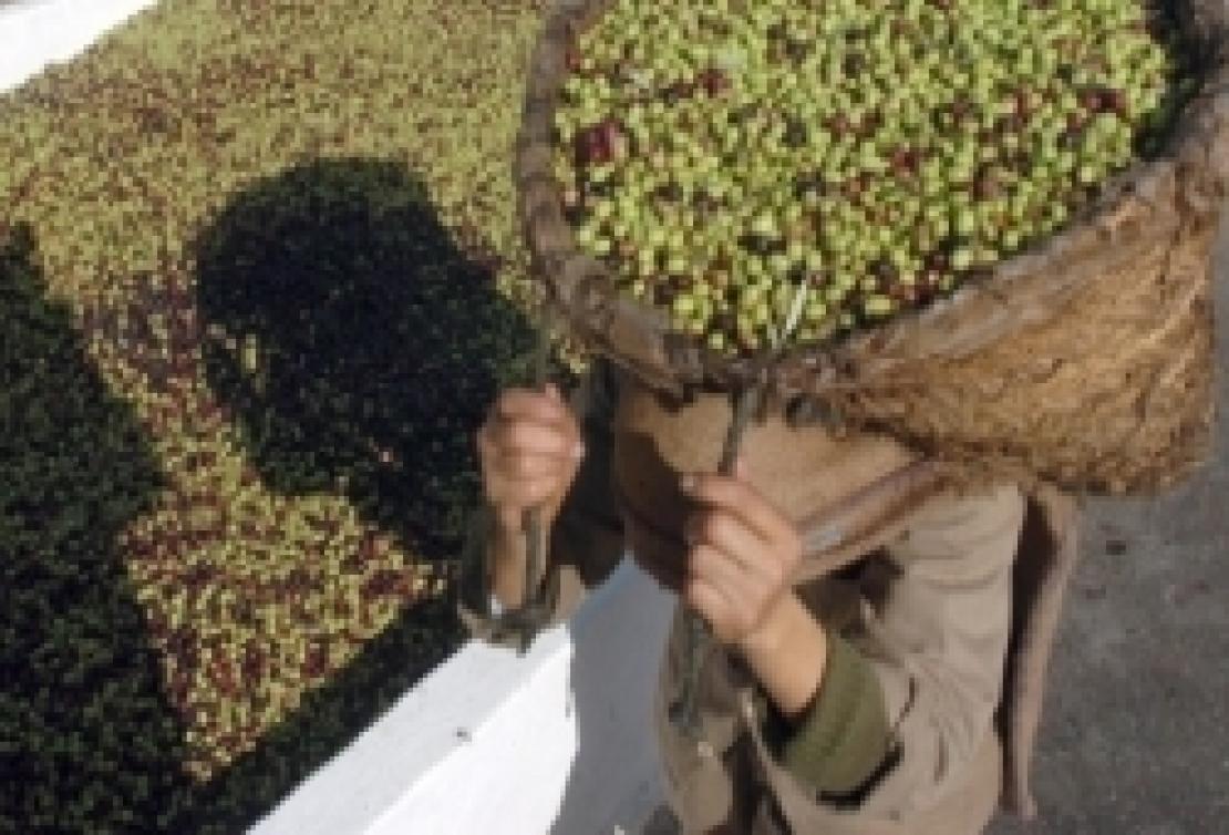 Dazio zero per l'olio d'oliva dalla Tunisia, spunta l'ipotesi di una proroga