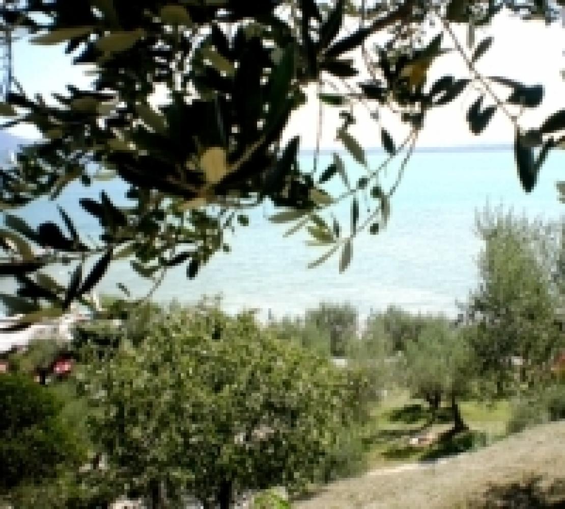 Dall'olivo Villa Romana al futuro olivicolo dell'Italia