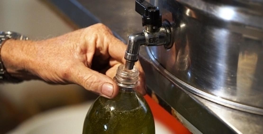 Meno di 300 mila tonnellate di olio d'oliva in Italia