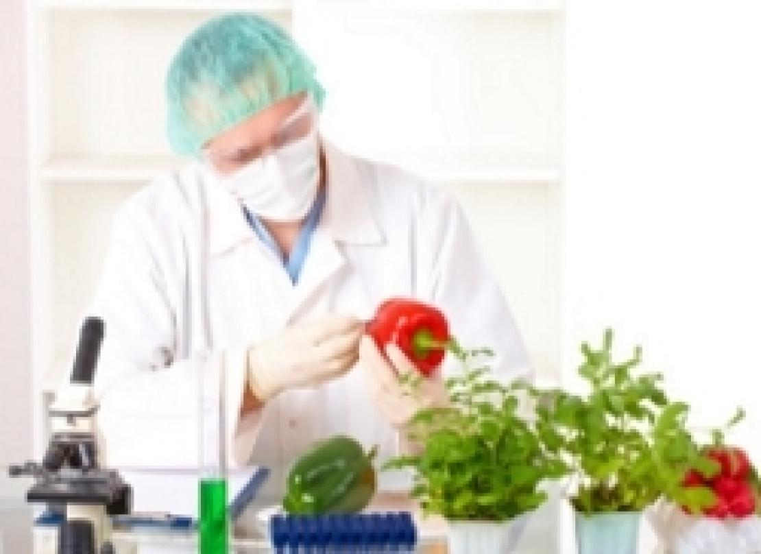 Baby food, vino e olio d'oliva sono sicuri: entro i limiti i residui di fitofarmaci