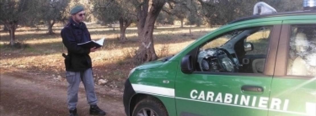 Campagna di controllo dei carabinieri forestali contro Xylella