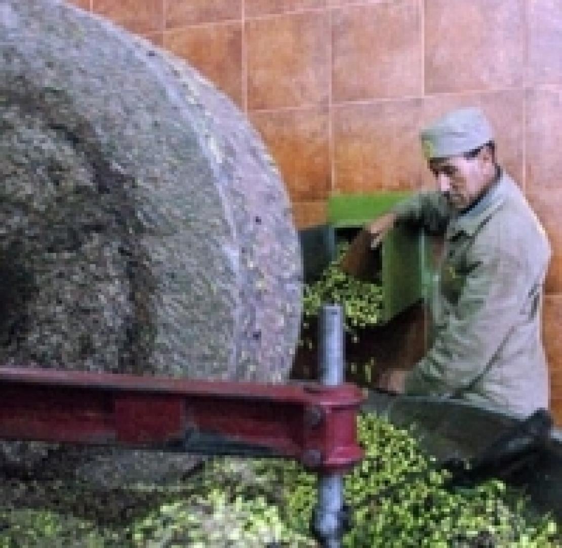 Via libera all'olio d'oliva tunisino senza dazi entro il 2019