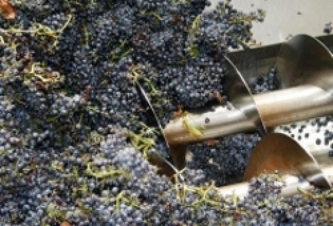 Equilibrio vitivinicolo mondiale: produzione di vino ai minimi, scambi ai massimi