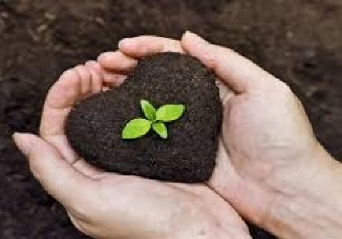 L'appello degli accademici europei: più sostenibilità per l'agricoltura
