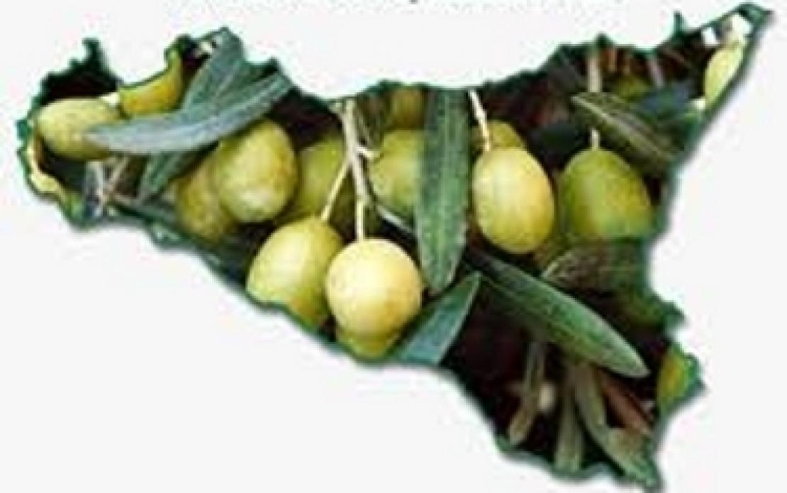 In Sicilia l'olio d'oliva c'è da più di 4000 anni