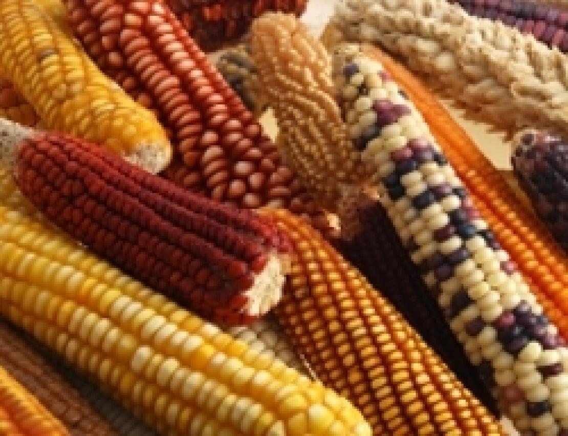 Sono tutti OGM, anche quelli con tecniche di nuova generazione