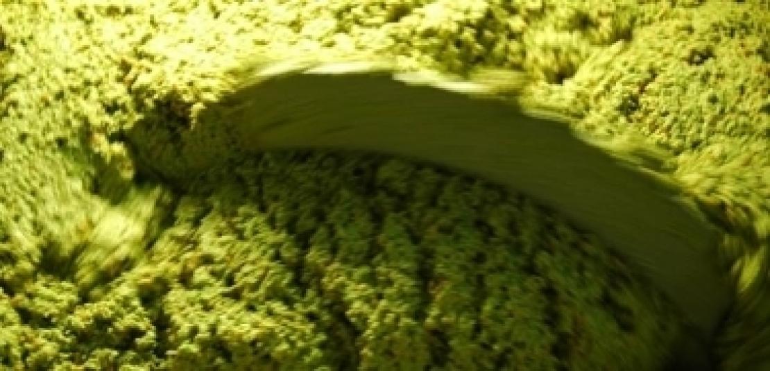 Il talco migliora la qualità dell'olio extra vergine di oliva spagnolo