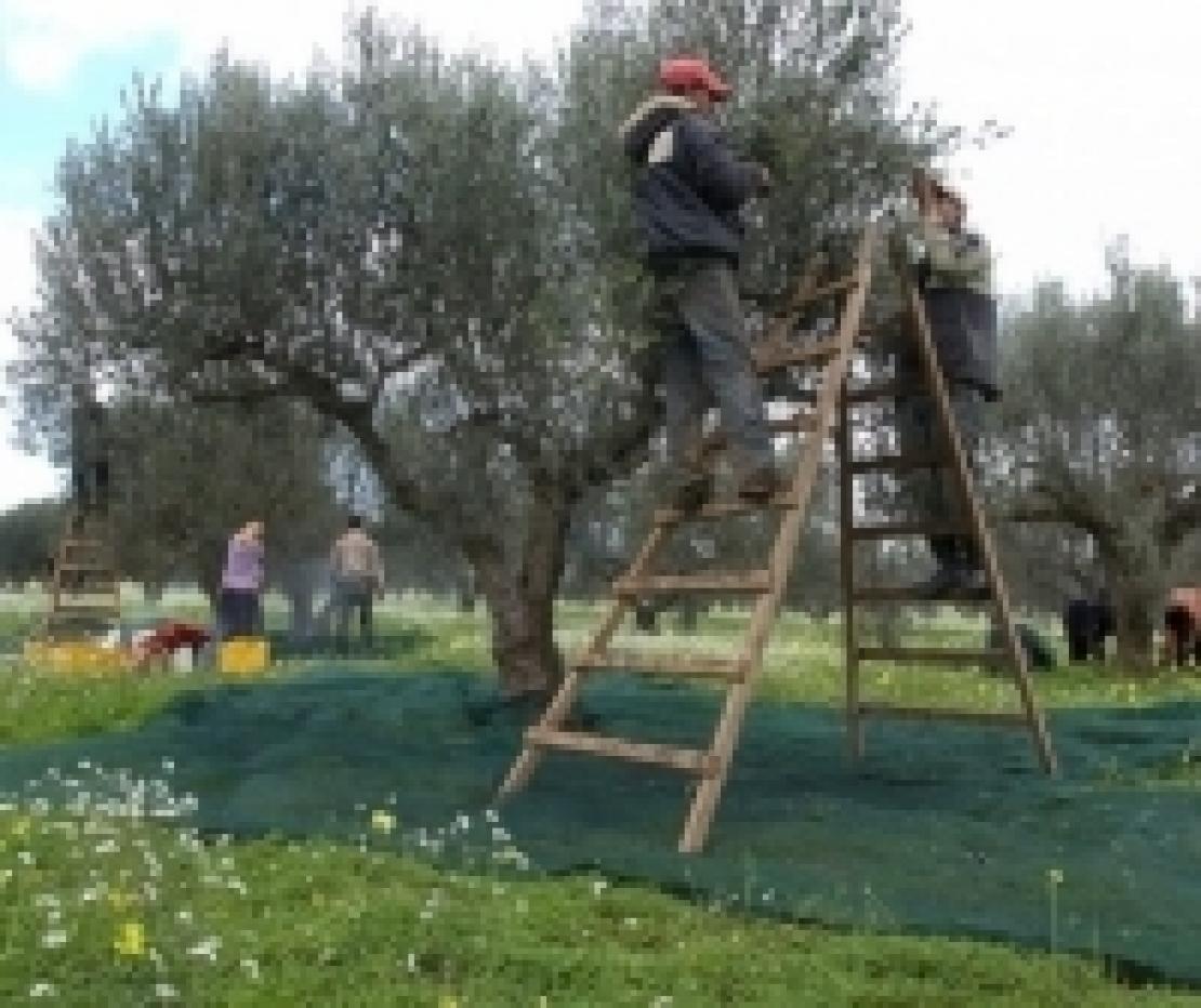 Phil Hogan conferma: la Tunisia ha chiesto la proroga dei dazi zero per l'olio d'oliva