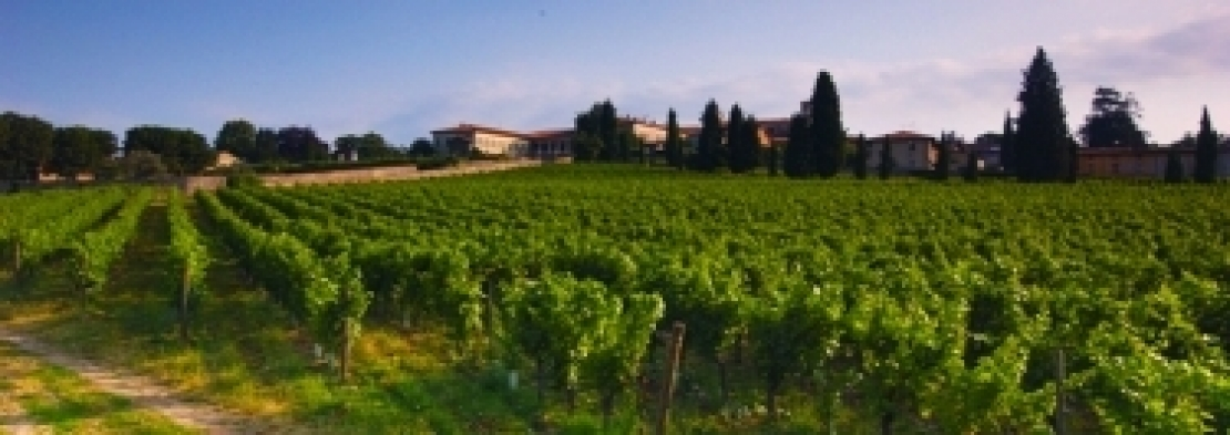 La Franciacorta in nomination come regione viticola dell'anno