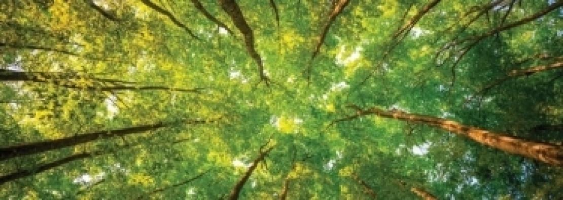 Le foreste italiane sono un patrimonio di bio-energy da valorizzare