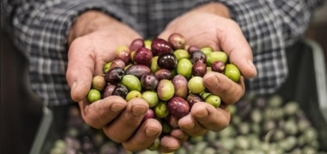 Accordo per l'olio extra vergine d'oliva italiano: 40 centesimi in più del prezzo di mercato