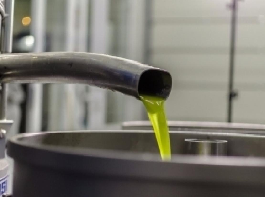 Varietà o tecnologia, cosa incide di più sulla qualità dell'olio extra vergine d'oliva?