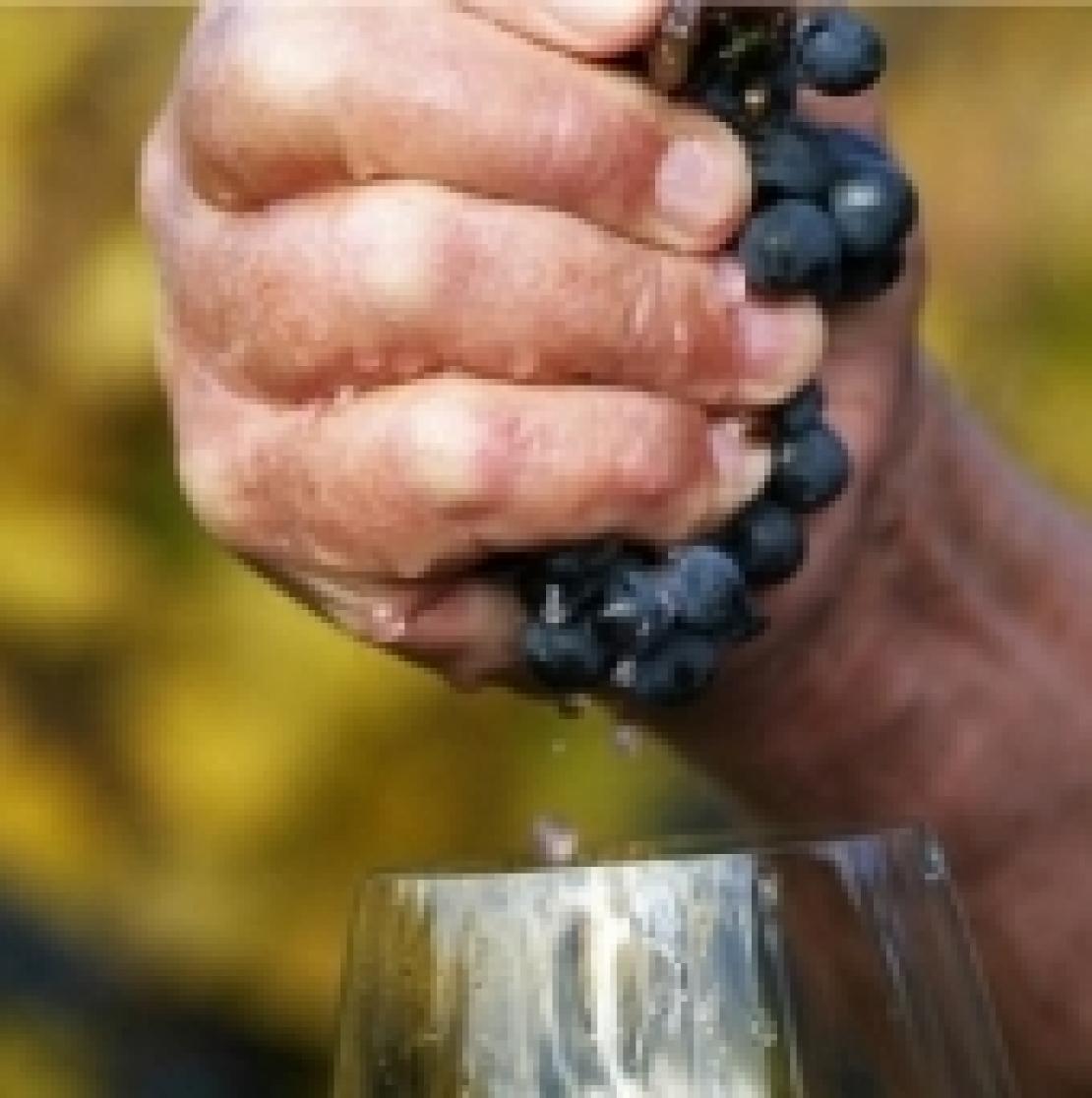 Vini naturali, non scienza ma filosofia produttiva