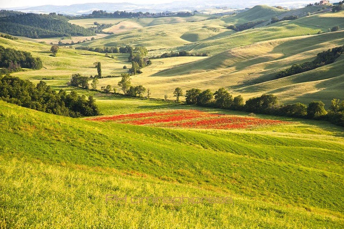 """I futuri """"manager del paesaggio agrario"""" della FAO studiano a Firenze: presentato il primo master internazionale del GIAHS"""