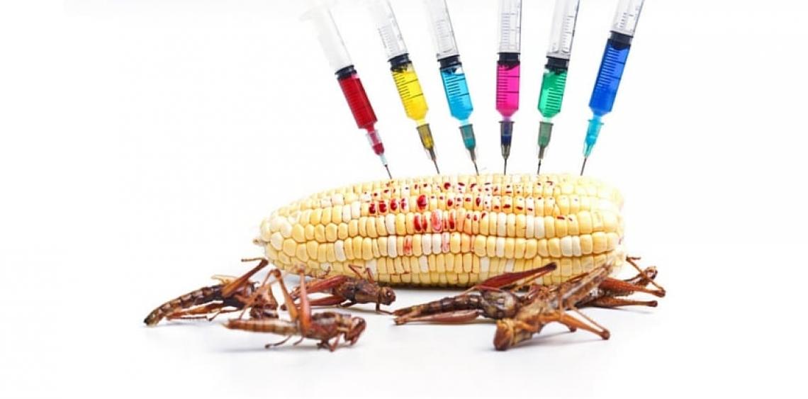 I pericoli per la salute alimentare sono micotossine, salmonella e fitofarmaci