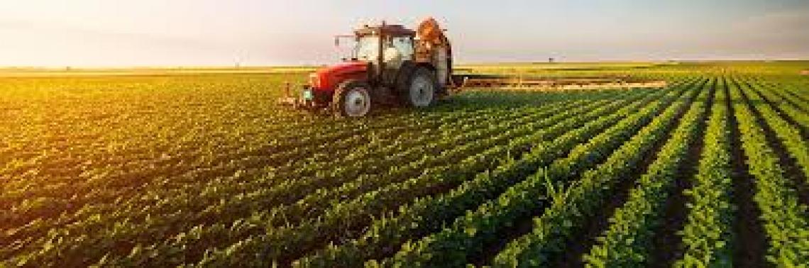 Cresce la produzione del comparto agricoltura a 54,6 miliardi di euro