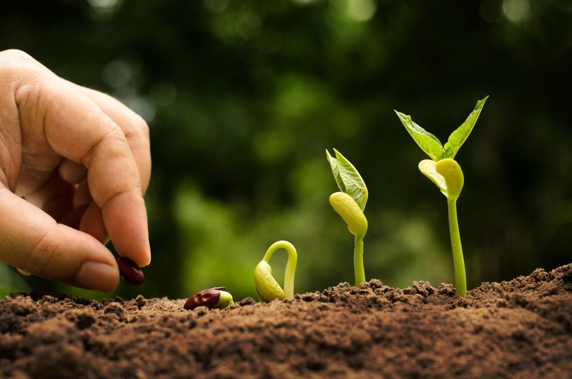 Aumenta la produzione agricola nel 2018