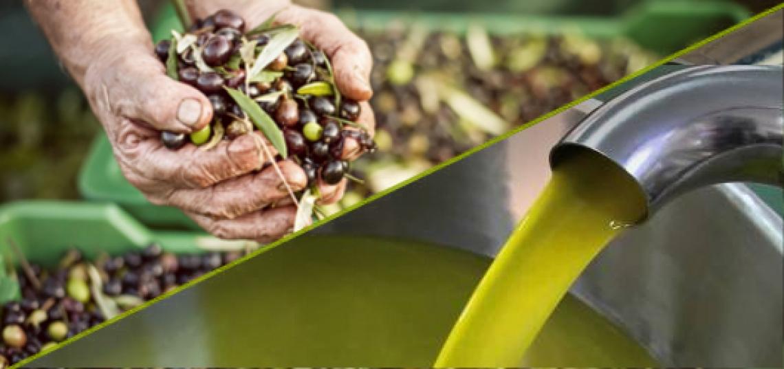 A Bari le più importanti innovazioni per l'olivicoltura e la vitivinicoltura