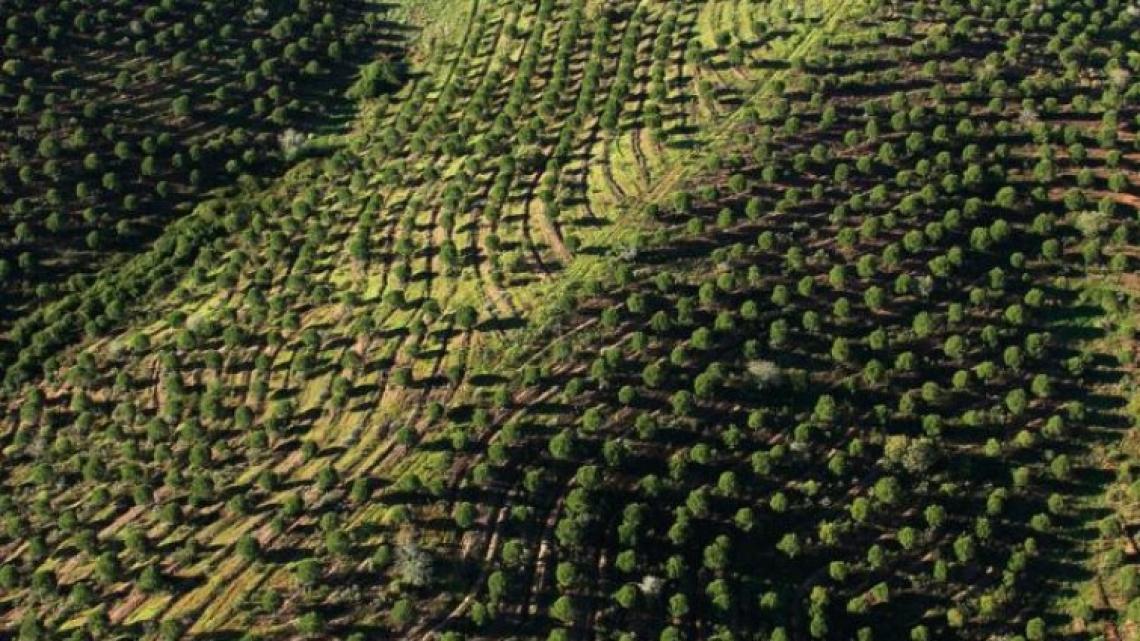 L'olivicoltura portoghese vista con gli occhi di un piccolo produttore