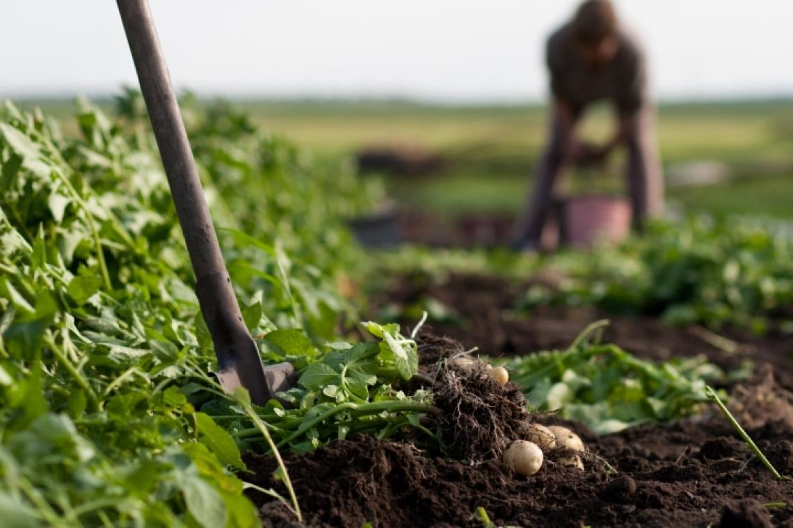 Continua il boom del biologico in campo e sui mercati mondiali